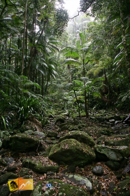 Walk in theAustralian bush Terania Creek NSW