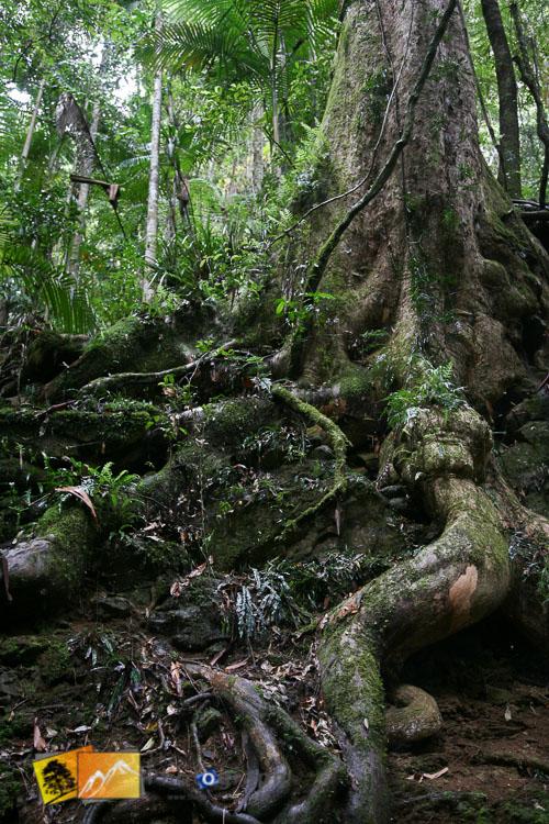 native bush tree roots