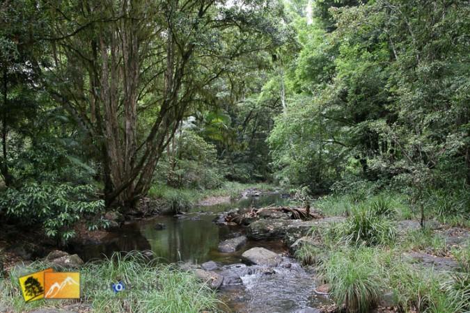 stream through native bush at Terania Creek NSW