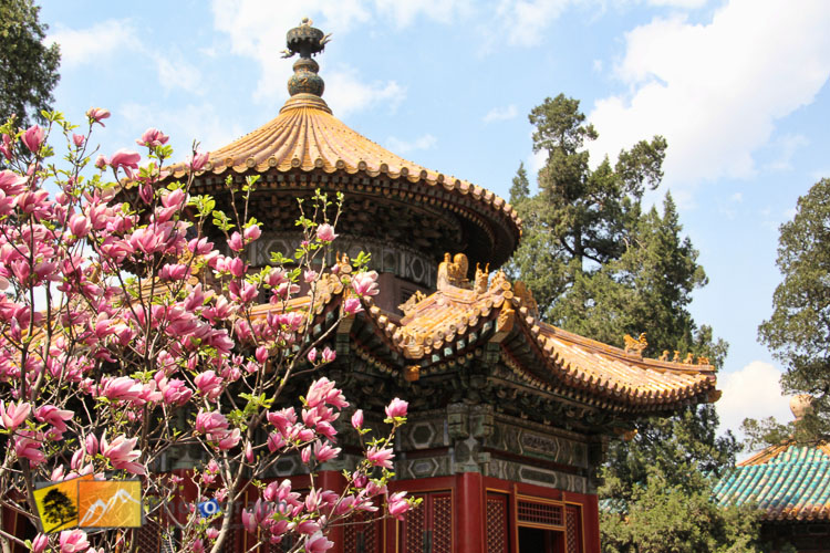 gardens of the summer palace in Beijing