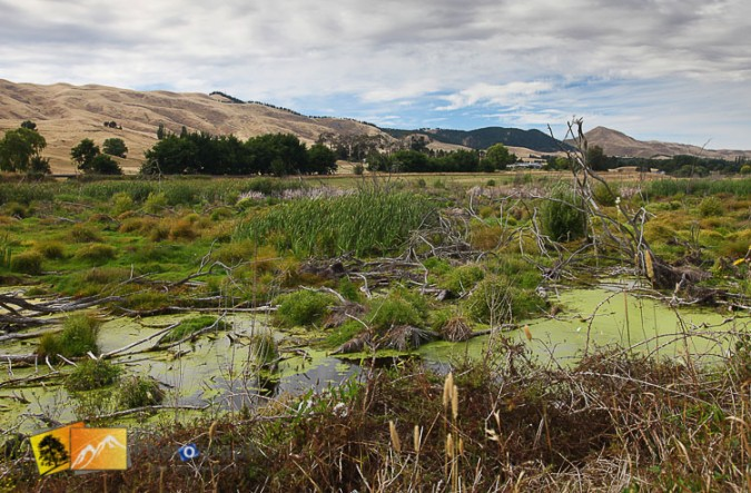 Wetlands near Napier.