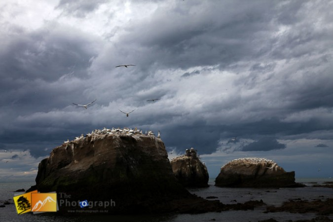 Cape Kidnappers gannet beach, hawkes Bay.