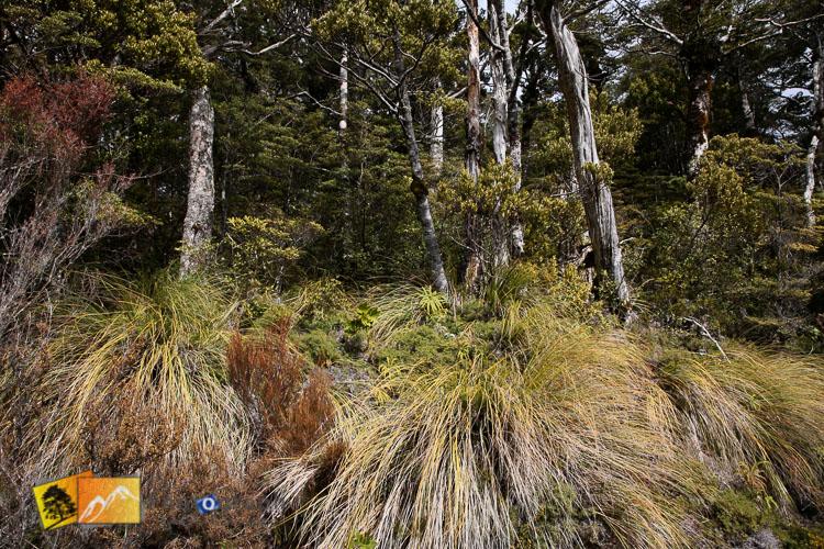 Grass and native bush.