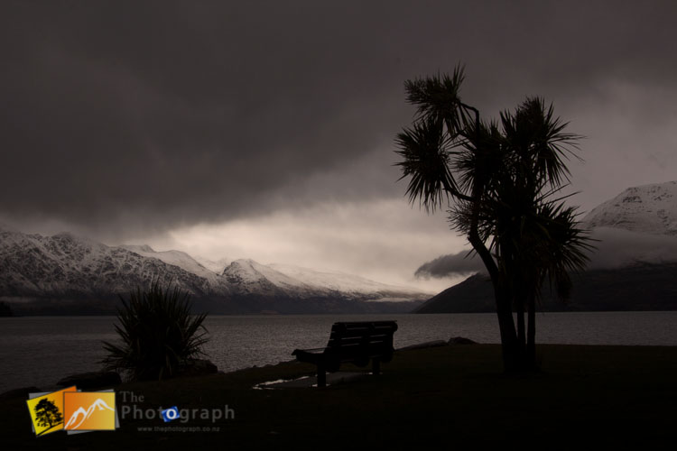 Cabbage tree in front of Remarkables.