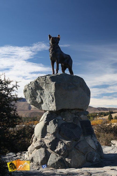 Dog statue at Lake Tekapo.