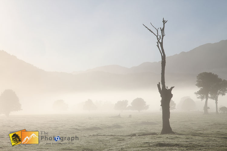 Misty morning on the south island.