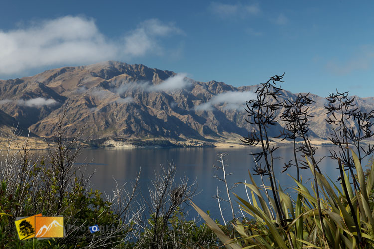 Native flax at Lake Hawea.