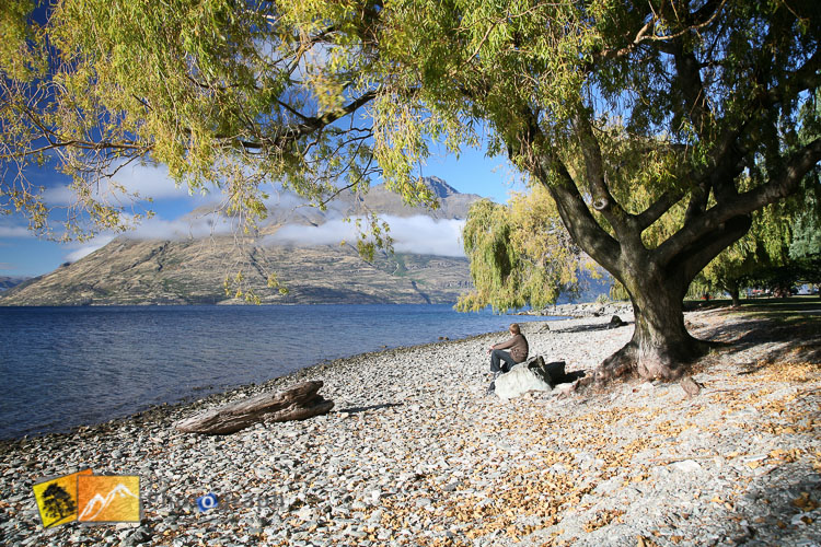 Willow tree in Queenstown park on Wakatipu shore.