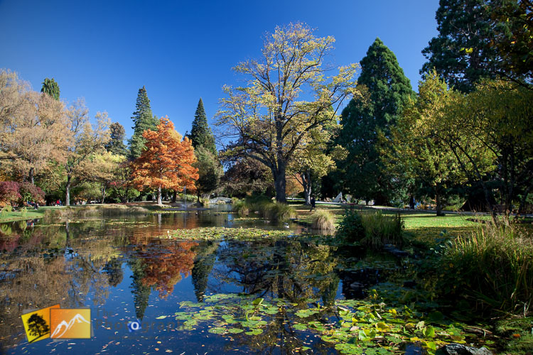 Reflections in the botanical gardens pond at Queenstown.