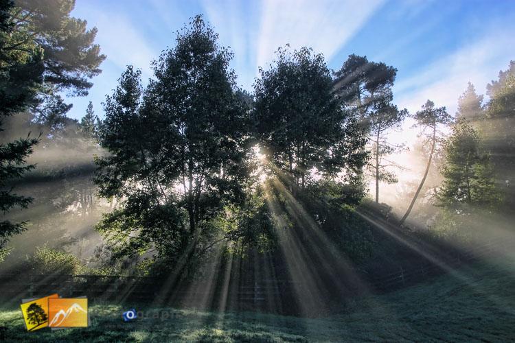 Mist through trees near huka falls.