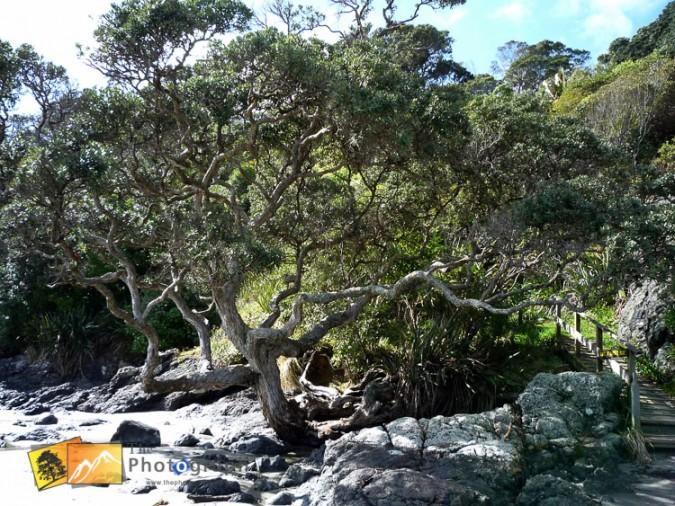 Trees on the beach.